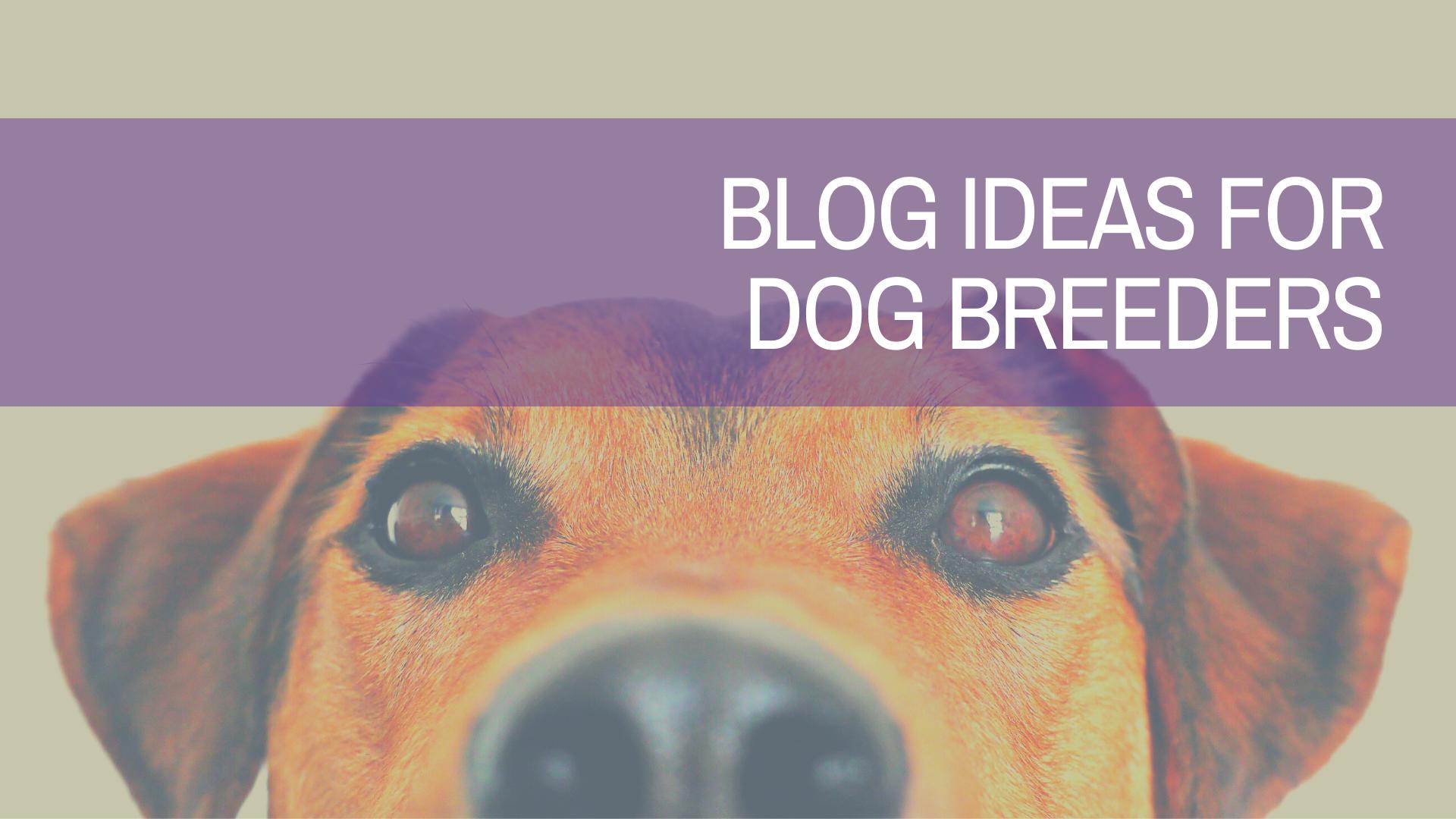 Blog Ideas for Dog Breeders | Amplihigher