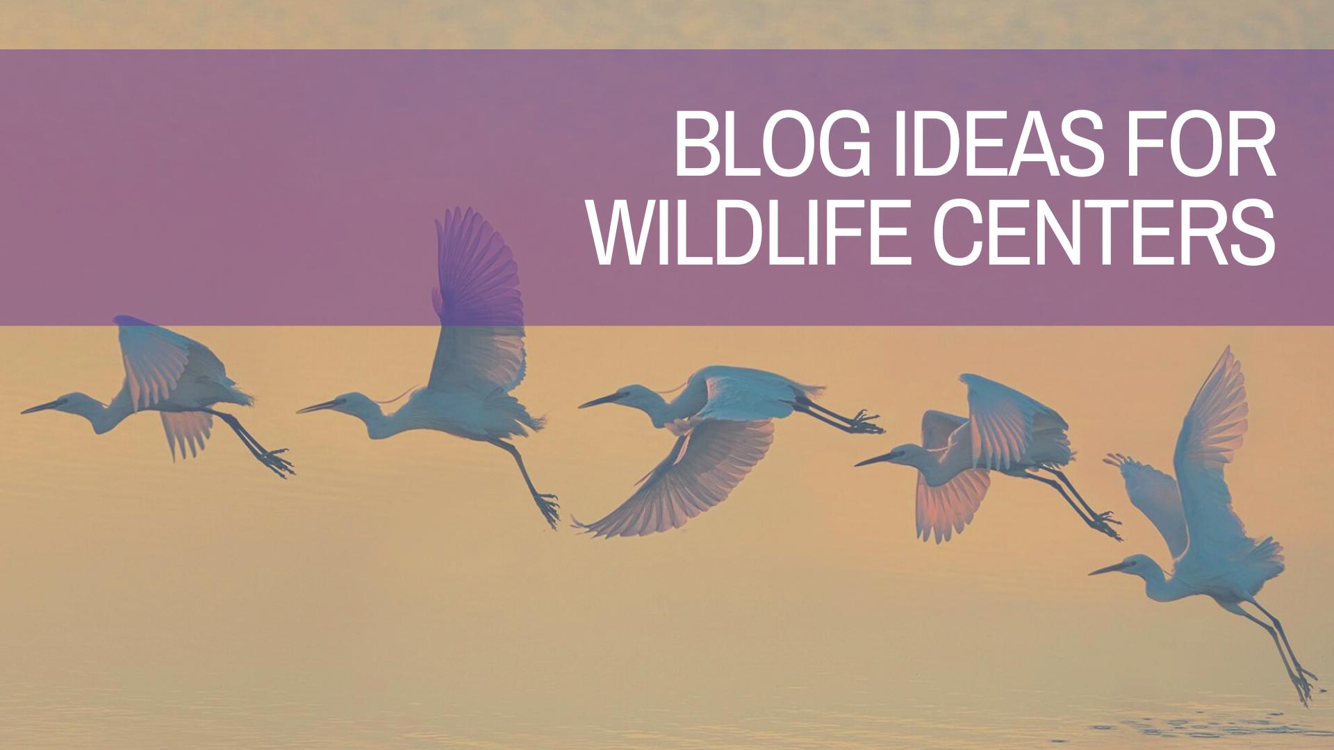 Blog Ideas for Wildlife Centers | Amplihigher
